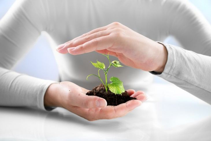 Kiedy i czym okrywać rośliny?