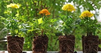 Jak kupować rośliny