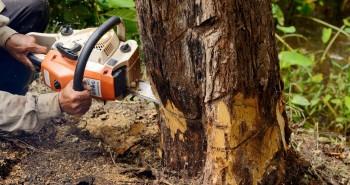 Wycinanie drzew zgodnie z prawem