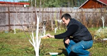 Czy bielenie drzew jest konieczne?