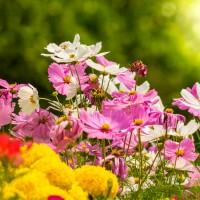 Kwiaty z własnego ogrodu