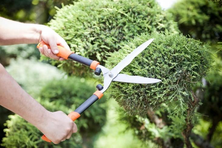 Dlaczego warto ciąć rośliny wiosną