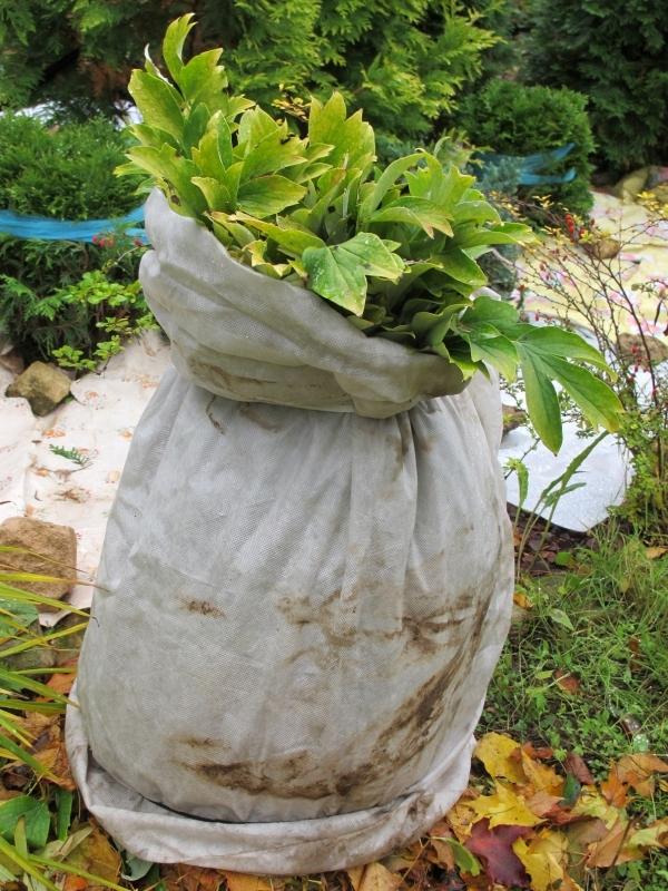 Otulamy rośliny na zimę