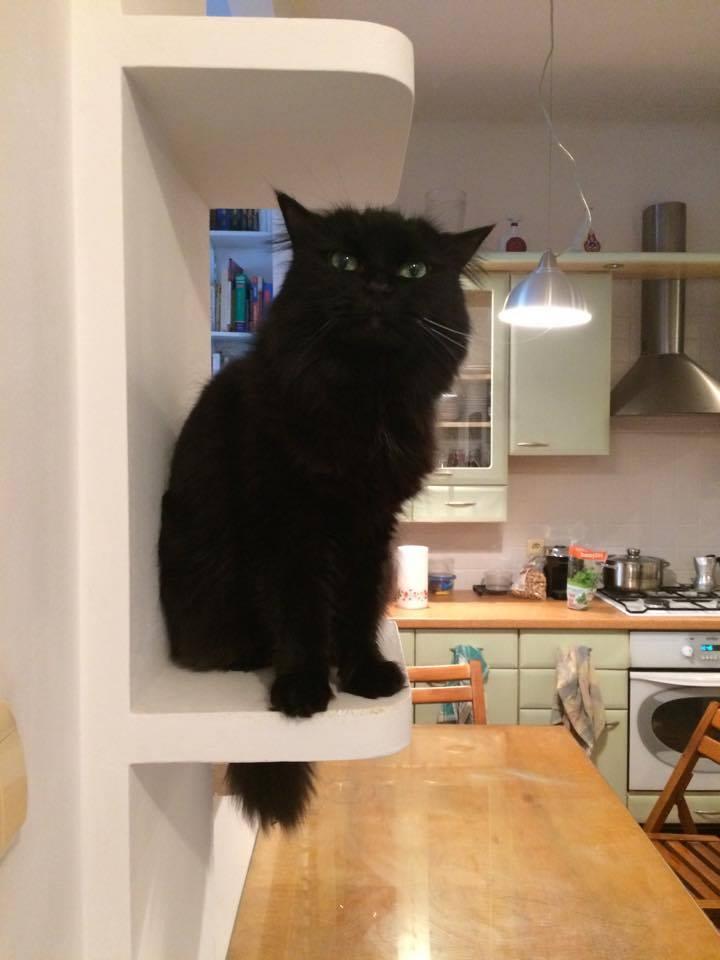 Mieszkanie przystosowane dla kota