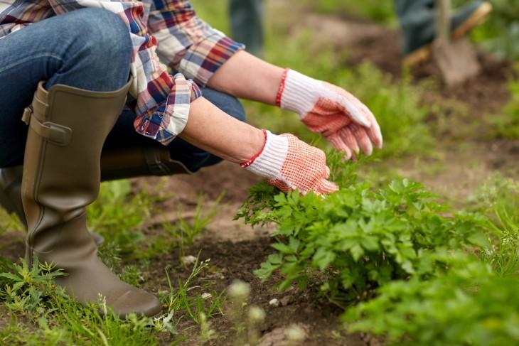 Bezpieczna praca w ogrodzie