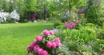 Majowe kompozycje roślinne