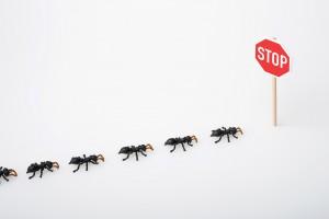 Jak pozbyć się mrówek z domu?
