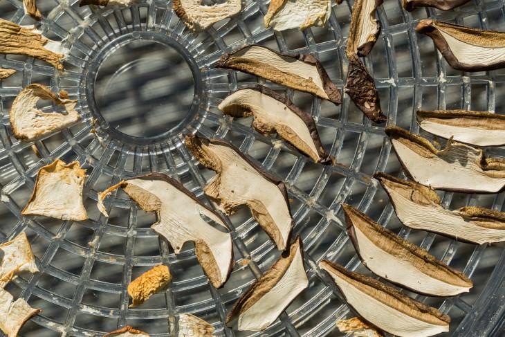 Suszarka do grzybów – jaką kupić