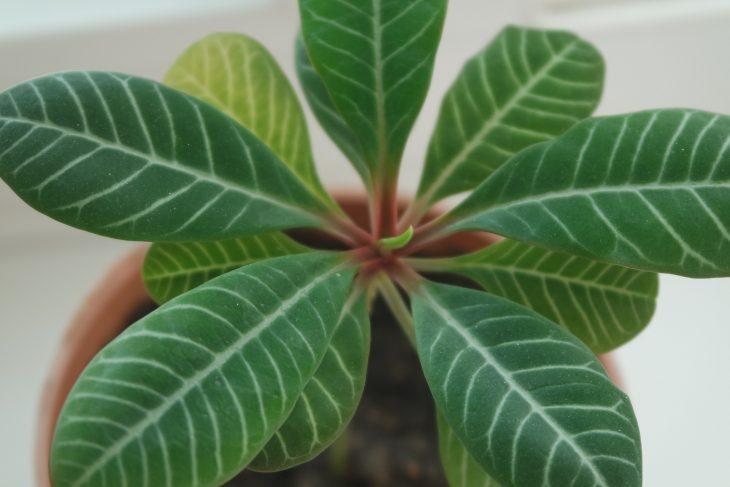 Czyste i lśniące rośliny doniczkowe