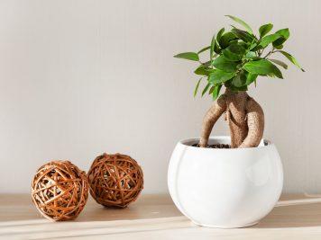 Gotowe drzewka i rośliny à la bonsai