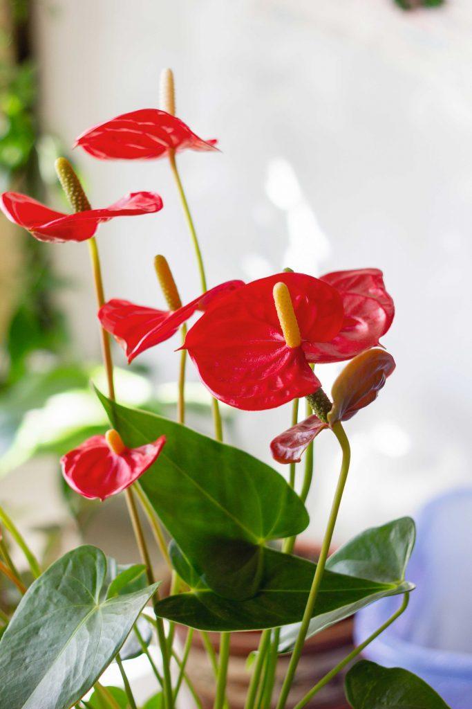 Rośliny, które oczyszczą powietrze w domu