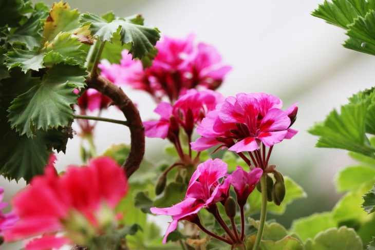 Dlaczego warto wysiewać kwiaty jednoroczne