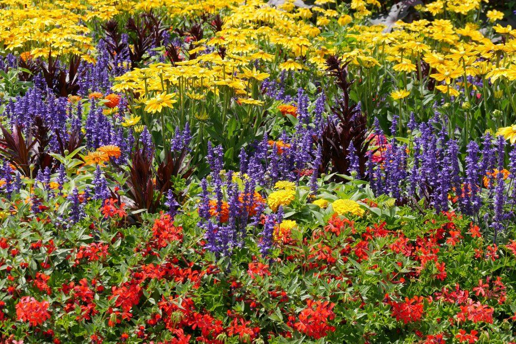 Wielokolorowa rabata kwiatowa