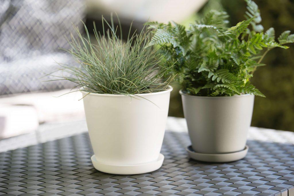 Rośliny w doborowej oprawie – doniczki i osłonki Verdenia