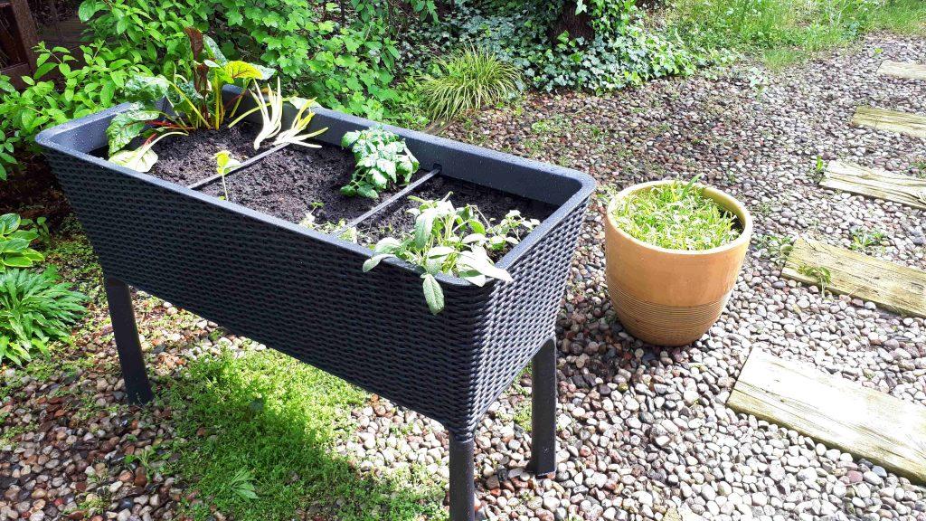 Warzywnik – łatwy sposób na ogrodową grządkę