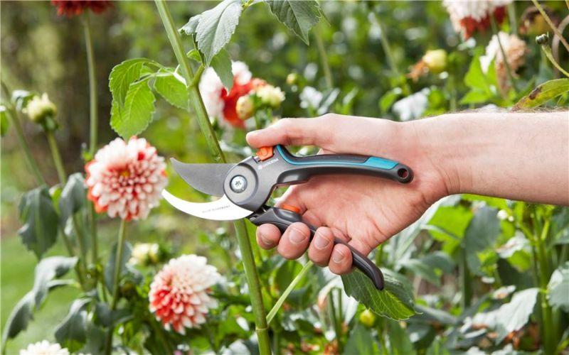 Ważne cięcie roślin, czyli wiosna z sekatorem