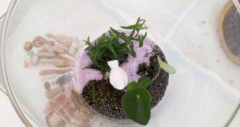 Ogród w wazonie – prosta i efektowna dekoracja