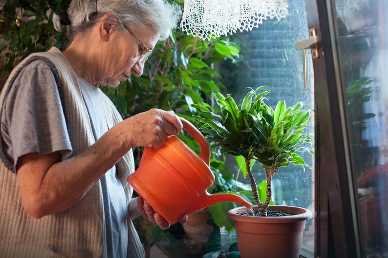 Jak zadbać o kwiaty doniczkowe podczas upałów?