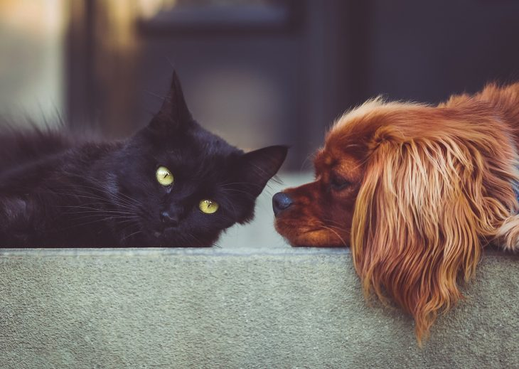 Jak chronić zwierzęta przed upałami