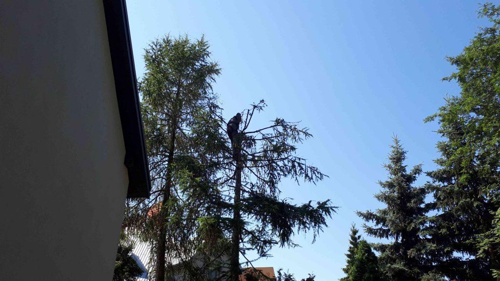Jak zmierzyć się z wycinką drzew na posesji