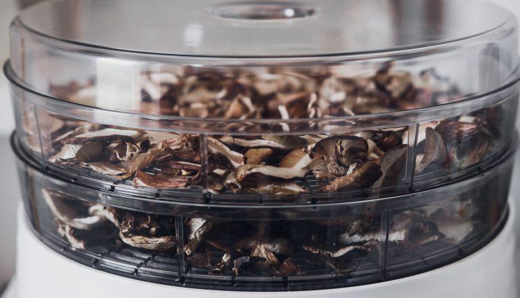 Jaka suszarka do grzybów