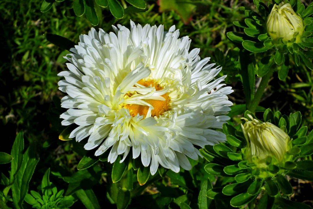 Nieoczywiste kolory w ogrodzie, czyli jesień pełna bieli i błękitu