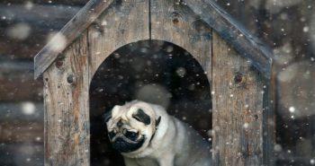 Ciepła buda dla psa