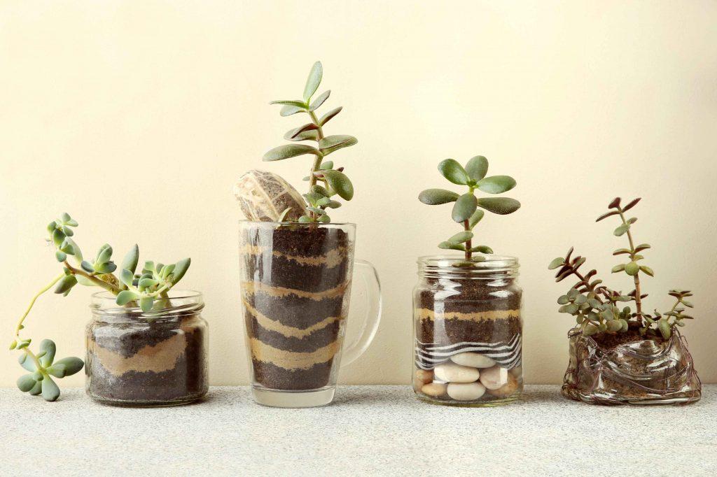 Kaktusy stylowo zaprezentowane-1