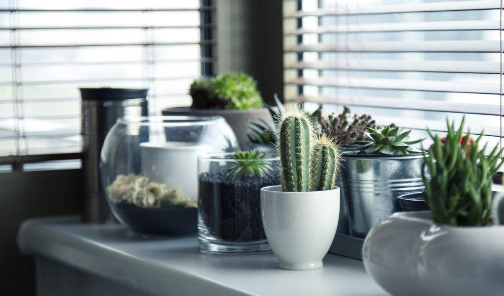 Kaktusy stylowo zaprezentowane