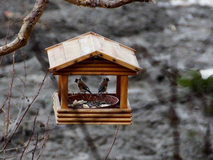 Dokarmianie ptaków zimą – czym karmić ptaki