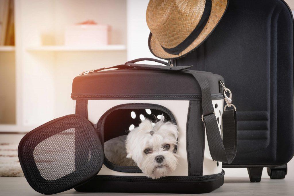 Transport zwierząt – jak wygodnie i bezpiecznie przewozić psa i kota