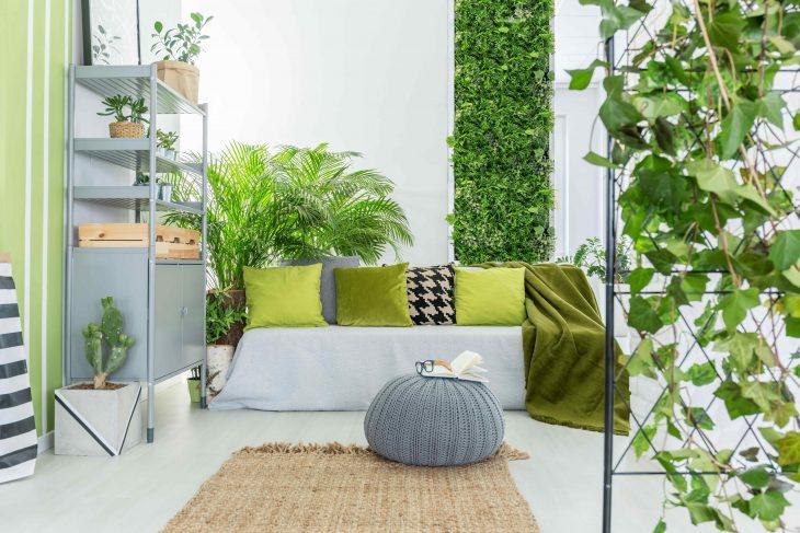 Wnętrze opanowane przez rośliny