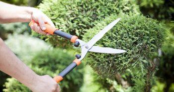 Cięcie roślin – dlaczego warto ciąć rośliny wiosną