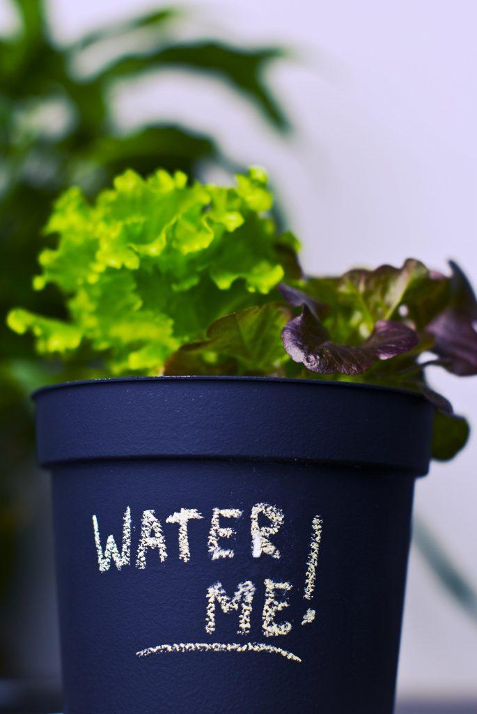 Jak uprawiać zioła na parapecie
