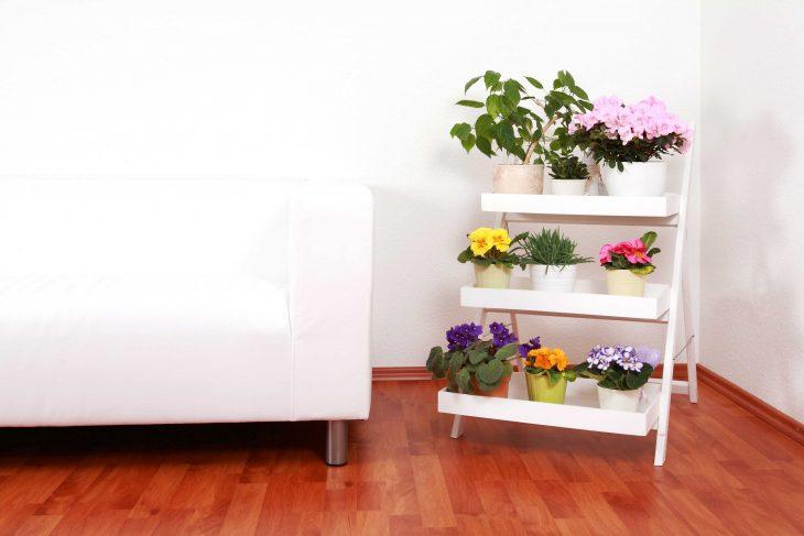 Kwietnik kaskadowy – piętrowa prezentacja roślin ozdobnych