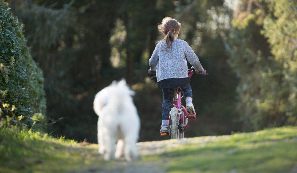 Czas na spacer i zabawy z psem