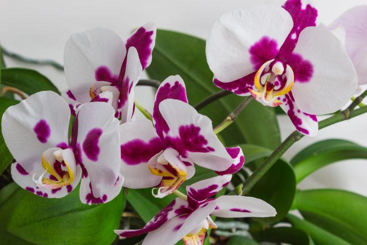Storczyki – idealne kwiaty do łazienki