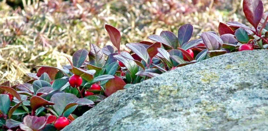 Rośliny doniczkowe na cały rok, ale i w sam raz na święta