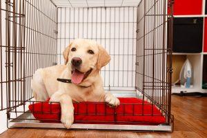 Pies w domu a ładne wnętrze – jak to połączyć