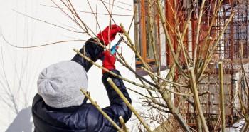 Jak ciąć rośliny zimą?