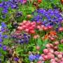 Jak skomponować wielokolorową rabatę kwiatową
