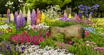 Zanim ogród zakwitnie pełnią kolorów