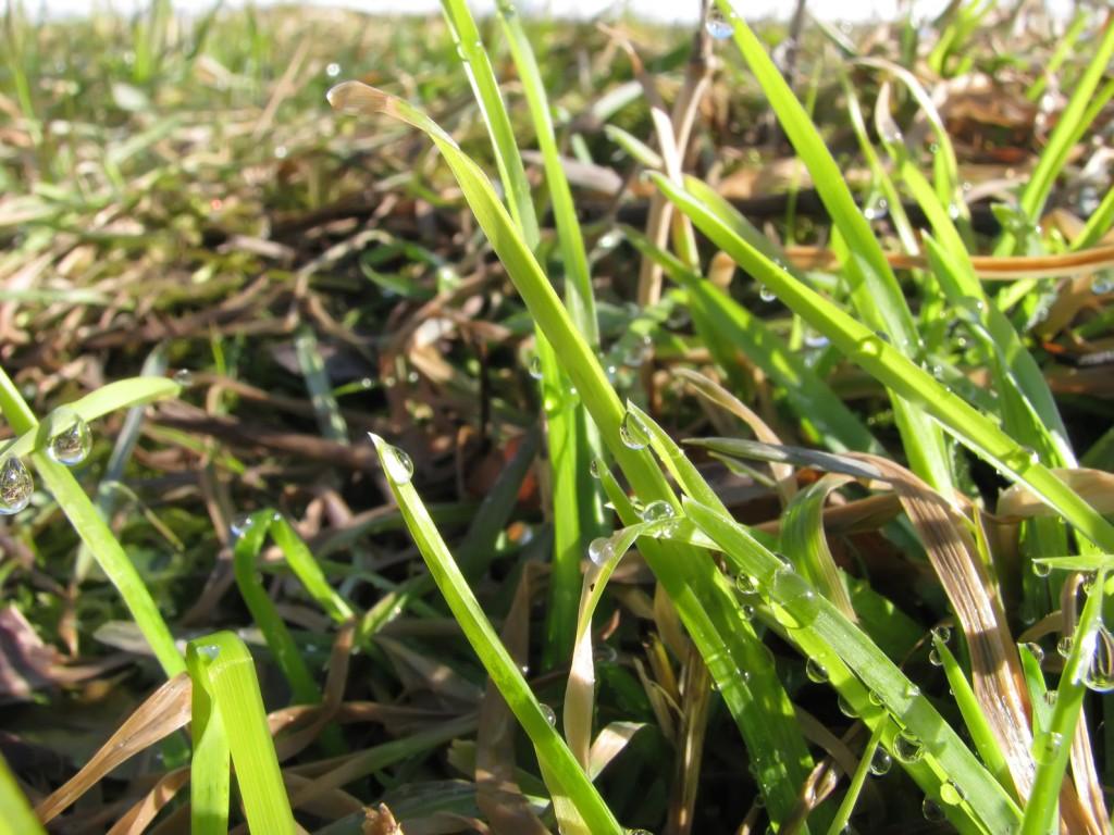 Renowacja trawnika na wiosnę