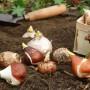 Jesienne sadzenie roślin - krok po kroku