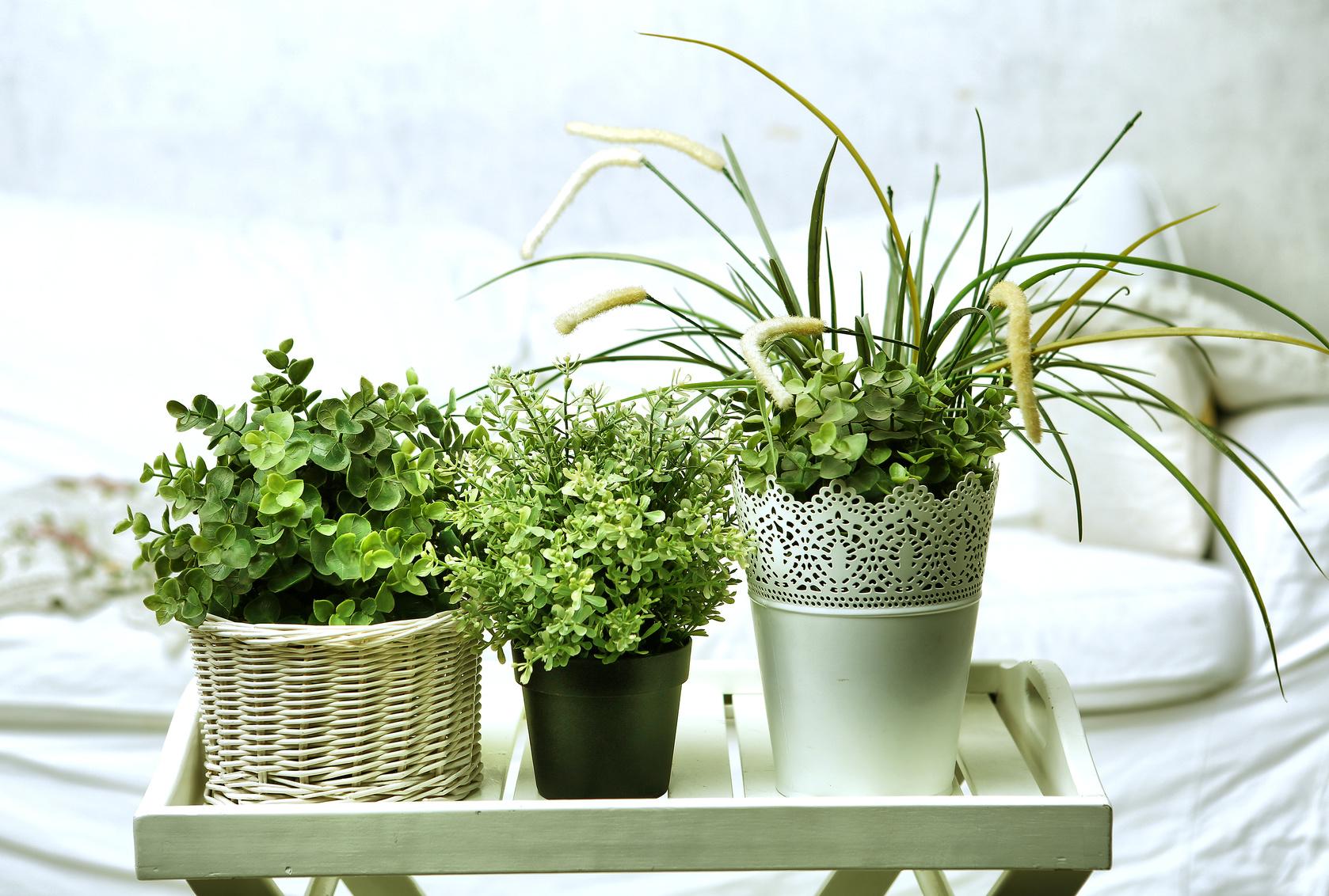 Rosliny-ktore-oczyszcza-powietrze-w-domu