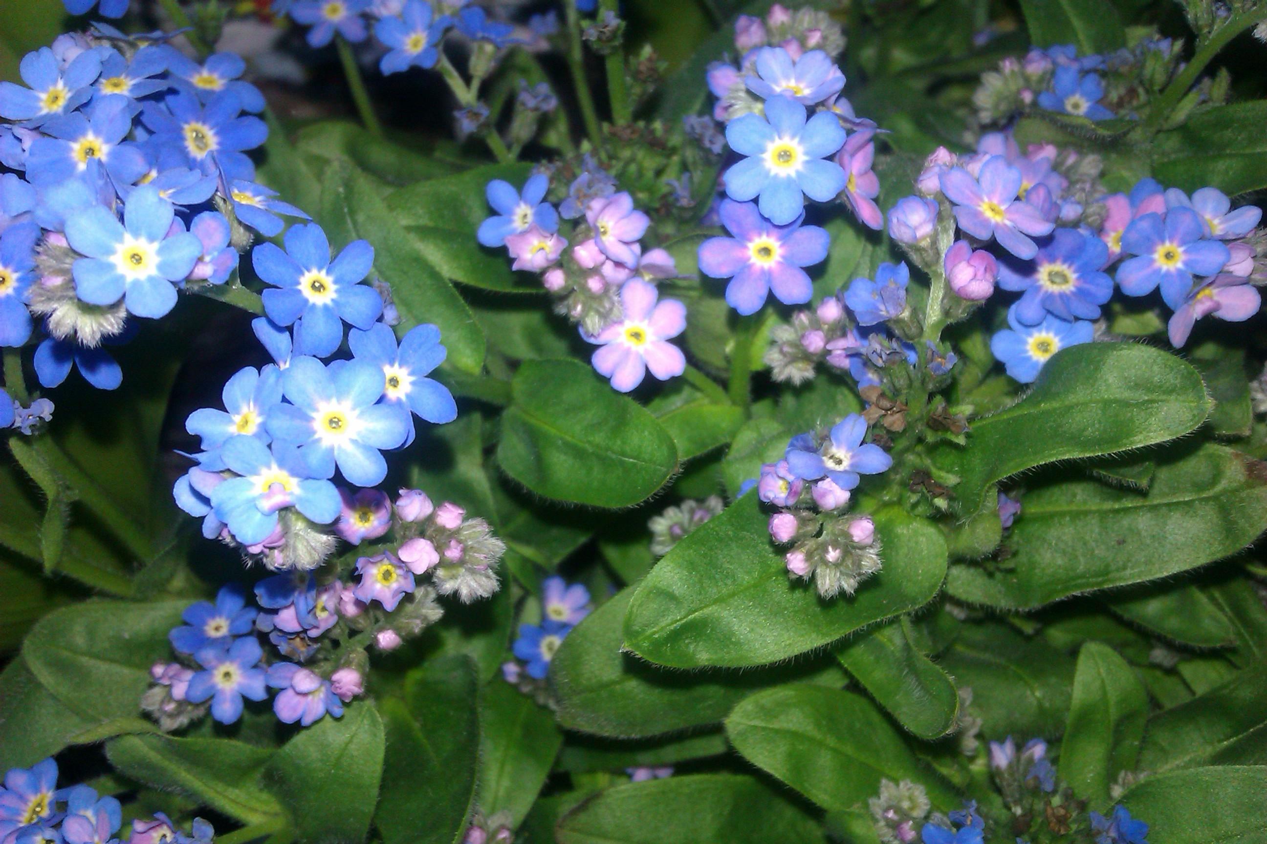 Wiosenne Kwiaty W Dekoracjach Domowych