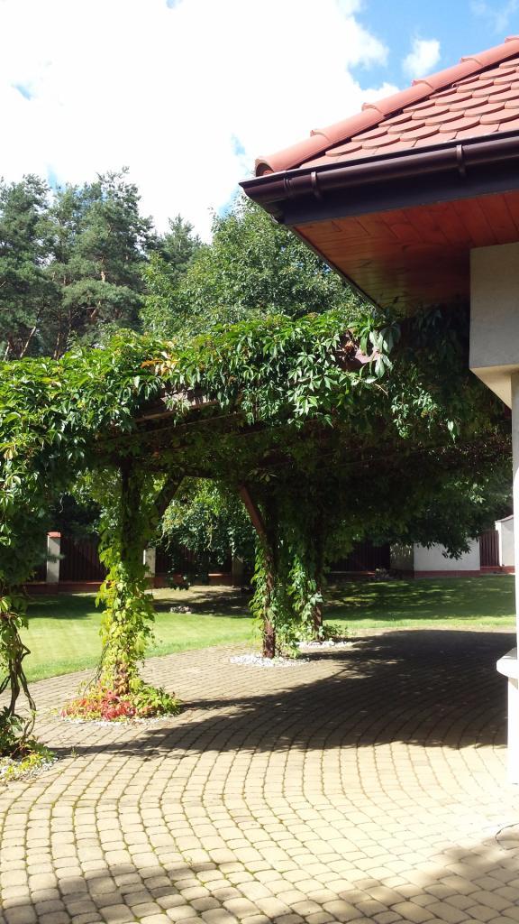 Pergola Roślinna Jako Zadaszenie Tarasu