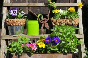 Półki w ogrodzie