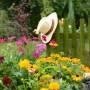 Ogród wiejski latem