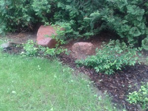 Rośliny zadarniające w ogrodzie